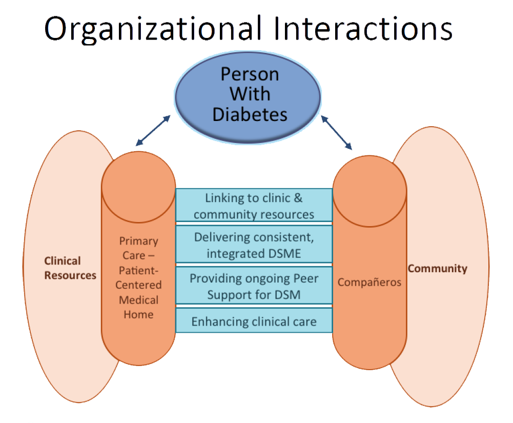 Model of organizational interactions detailing linkages between clinic and community resources